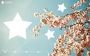 arbre,étoile