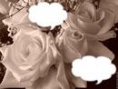 rose sepia