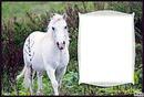 cheval prairie