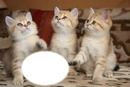 *Famille chatons*