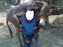 caballo burro pony