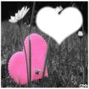 champs de coeur