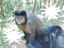 macaco 2 foto veu das noiva