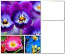 violetas 2 fotos