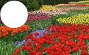 flores coloridas e lindas