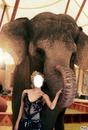 dressage d elephant