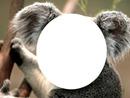 koala a 1 visage