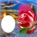 rosa y mar