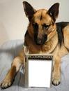 lecture pour chien