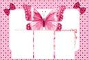 5 fotos borboletas