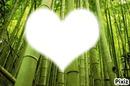 Les bambou
