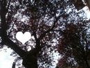 Coeur parmi les feuilles