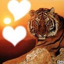 le tigre avec dx coeur au soleil