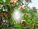 arbusto de flores