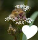 ma petite souris