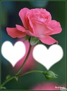 2 heart 1 r0se