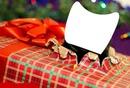 Chat dans cadeau