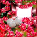 palomas con rosas