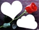 la rose de l'amour