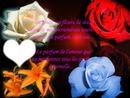 ma fleur éternel