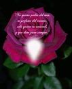 Cc bella rosa+texto de amistad