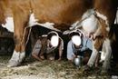 le bon lait