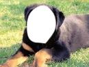dog-modern