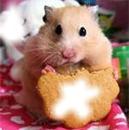 hamster 2 photo