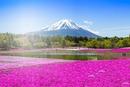 Volcan en lila