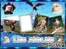 LES AIGLES (photomontage fait par GINO GIBILARO )