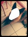 Ma chienne Tania