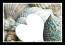 coeur et coquillages