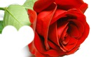 rose rouge coeur