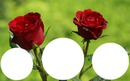 2 roses rouges laly