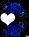 reflet d'une rose bleue