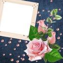Julita02 roses