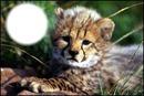 guepard 2
