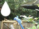 Les Perroquets bleus d'Amnéville