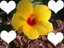 j'aime les fleures