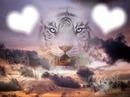 amour de tigre