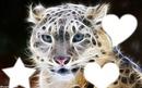 blend tigre