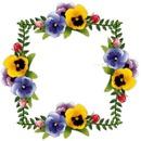 Viola  Spring