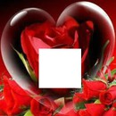 <3 Red roses' RED <3