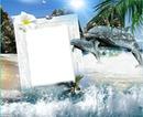 Cadre dauphins et vague