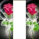 2 rosas con foto