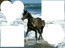 cheval à la mer