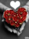 Coeur et rose♥
