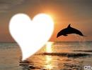 dauphin soleil