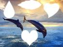 delfin de corazon y mucho mas