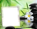 Cadre zen - fleur - pierres - verdure